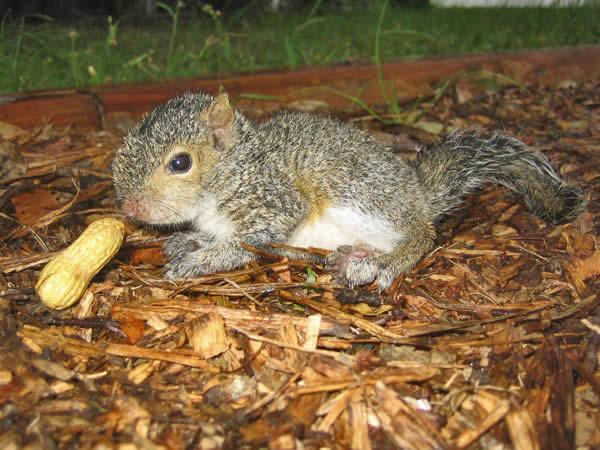 Yummy Peanut