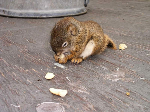 Baby Squirrel Close-up