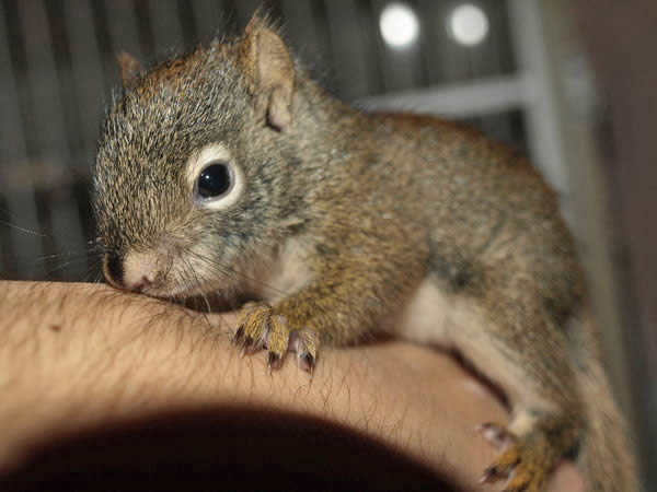 Adorable Baby Squirrel
