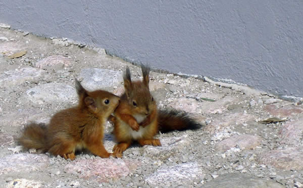 Cute Squirrel Babies