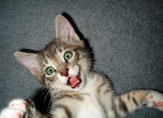 Cute Funny Kitten