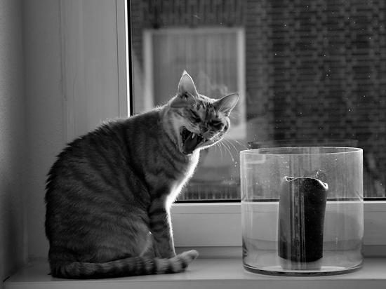 What Upset the Cat?