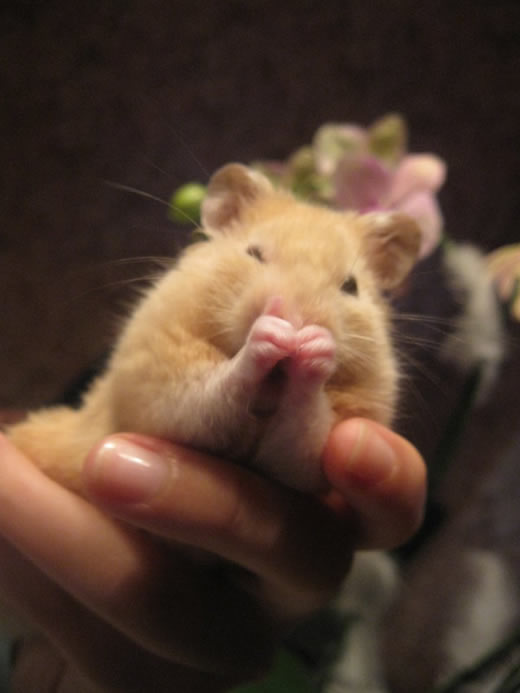 A Hamster Which Has a Wash