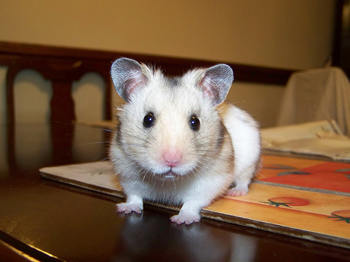 Hamster Doll