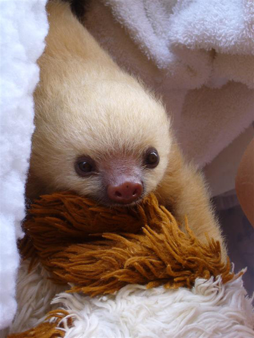Baby Sloth and His Teddy Bear