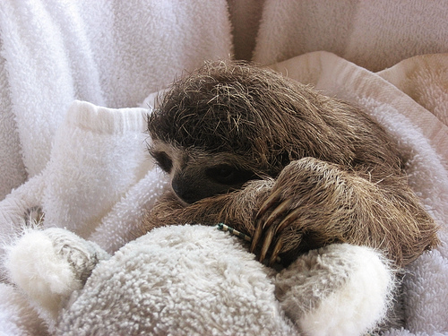 Furry Baby Sloth